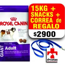 Royal canin giant adulto 15 kg + snacks + 1 correa de regalo!! $2900